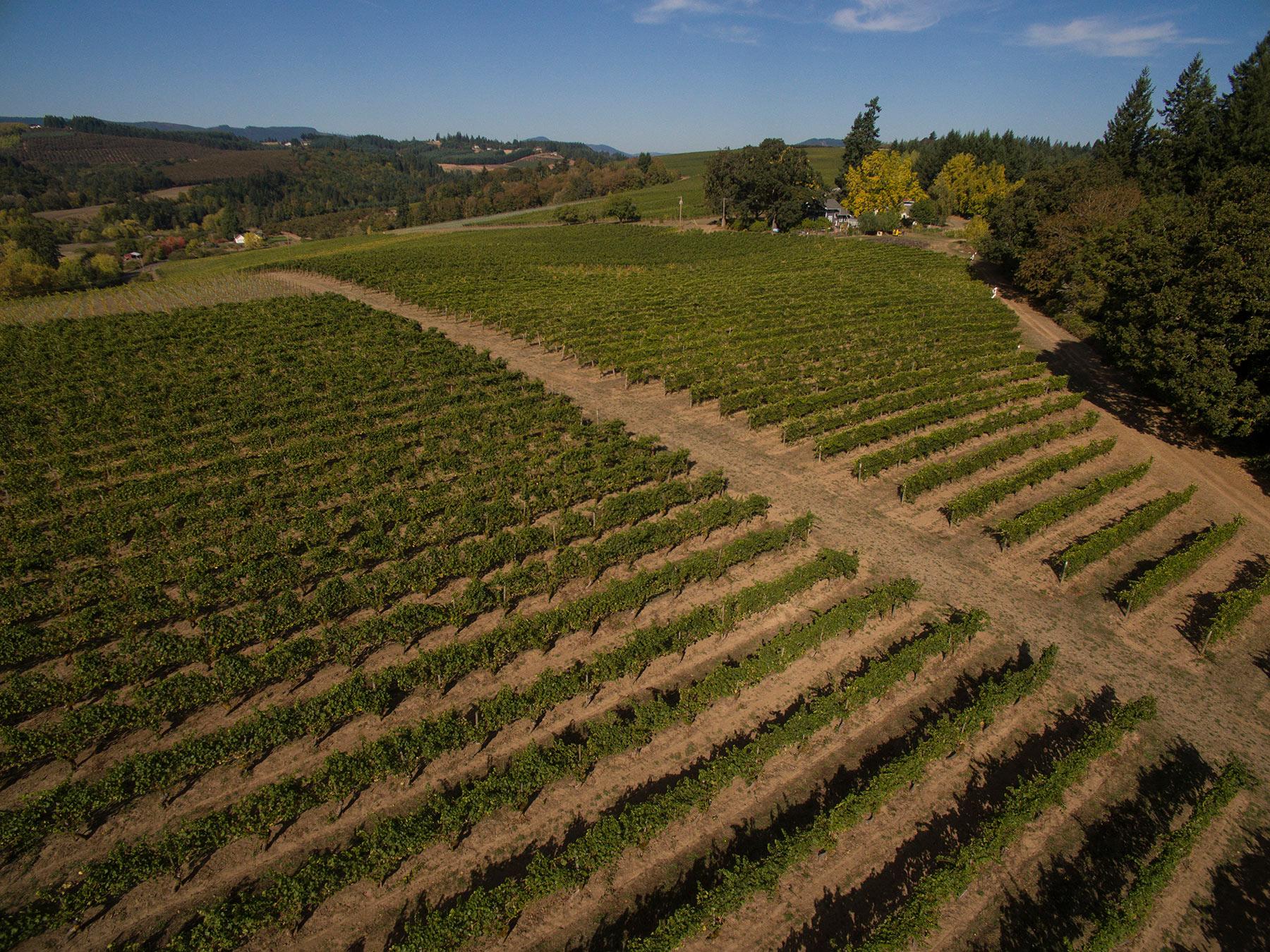 Tualatin-Estate-Vineyard-Header
